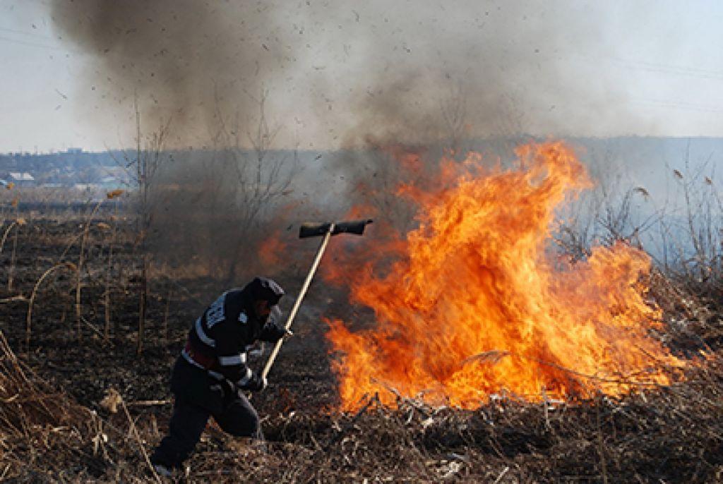 Un hectar de vegetație a ars la marginea municipiului Satu Mare