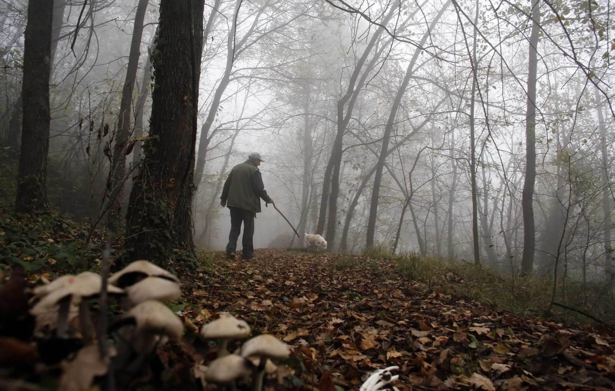 Aproape 700 de animale sunt vânate anual în pădurile din județ. Care este cel mai împușcat