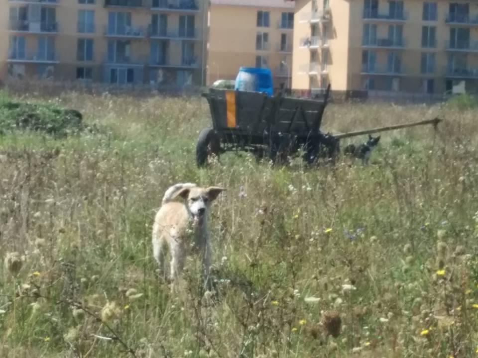 Familie de sătmăreni, atacată de o haită de câini în Florești