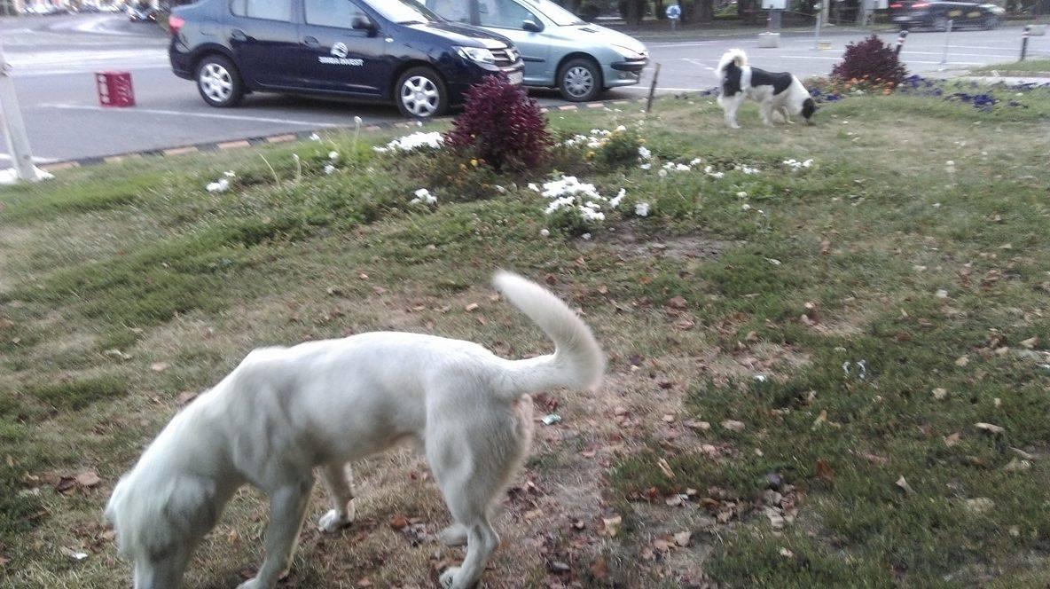 Centrul orașului, paradisul câinilor. Locuitorii din zonă îi lasă liberi printre terase