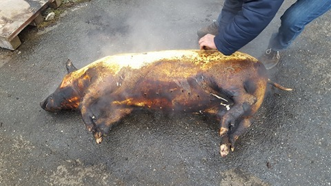 Sătmărenii au tăiat porci pe bandă rulantă în acest weekend. Tradiția totuși dispare încet…