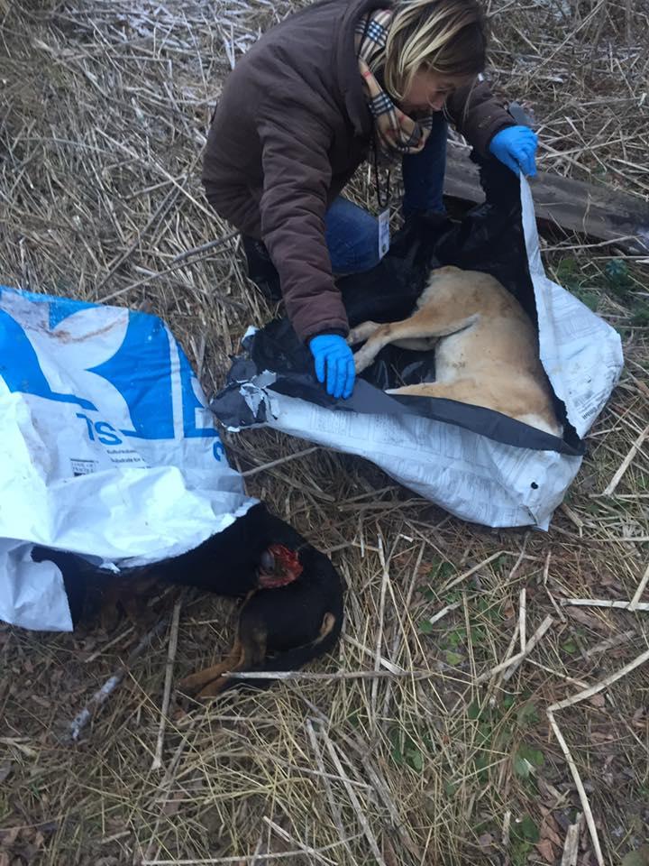 Cadavre de câini, descoperite la marginea orașului. AVERTISMENT – IMAGINI NECENZURATE