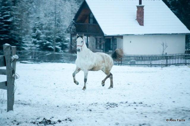 S-a furat un cal de 1500 de euro. Polițiștii au reușit să prindă hoțul