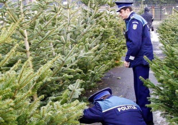 Polițiștii sunt cu ochii în patru pentru a depista brazi furați