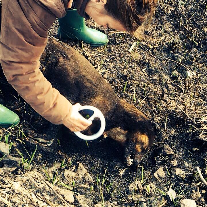 Doi noi cazuri de violență extremă asupra animalelor în municipiul Satu Mare. IMAGINI ȘOCANTE!