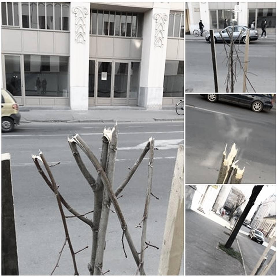 Doi încarcă, trei descarcă. Un angajat Florisal a rupt copaciide pe strada Ștefan cel Mare