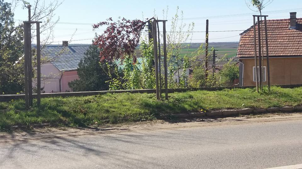 Noi acte de vandalism împotriva copacilor, de această dată la Tășnad