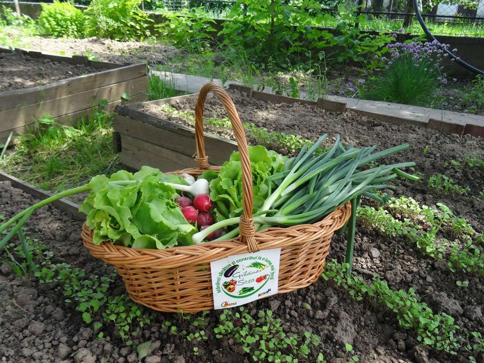 Meguntad a bevásároló központok felfújt és ízetlen zöldségeit? Vásárolj biozöldséget a Stea Egyesülettől!