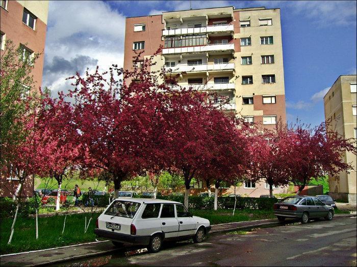 Sătmărenii au votat! Micro16 este cel mai curat cartier din municipiul Satu Mare