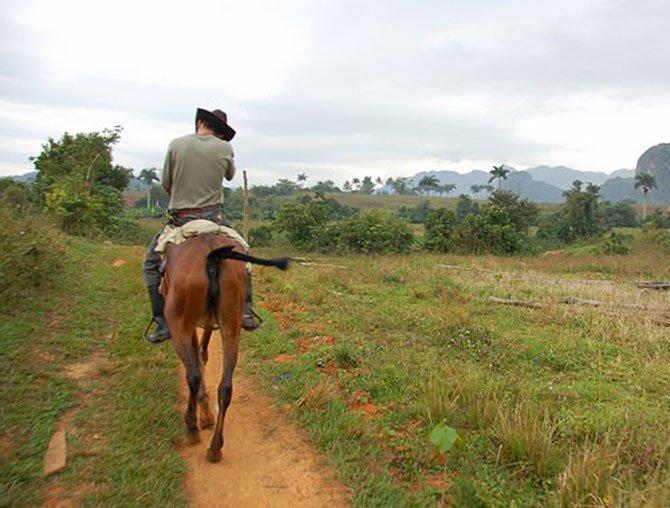 Băimărean la furat de cal în Bixad