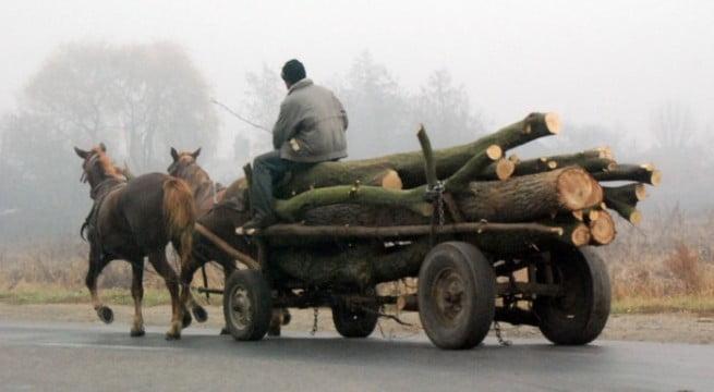 A început furtul de lemne pentru iarnă! Căruțaș amendat cu 5000 lei