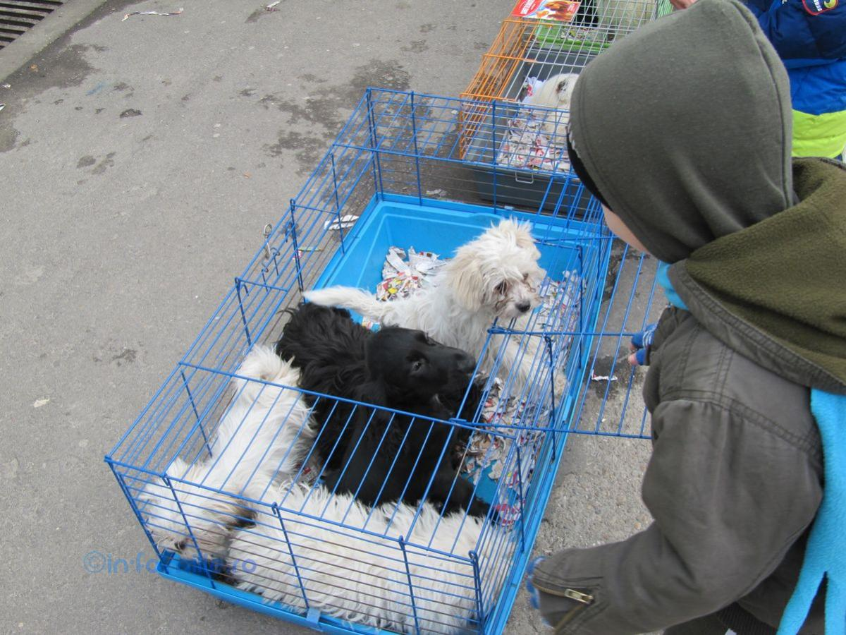 """O nouă """"modă"""" în lumea """"iubitorilor"""" de animale – abandonul în Piața de Vechituri"""