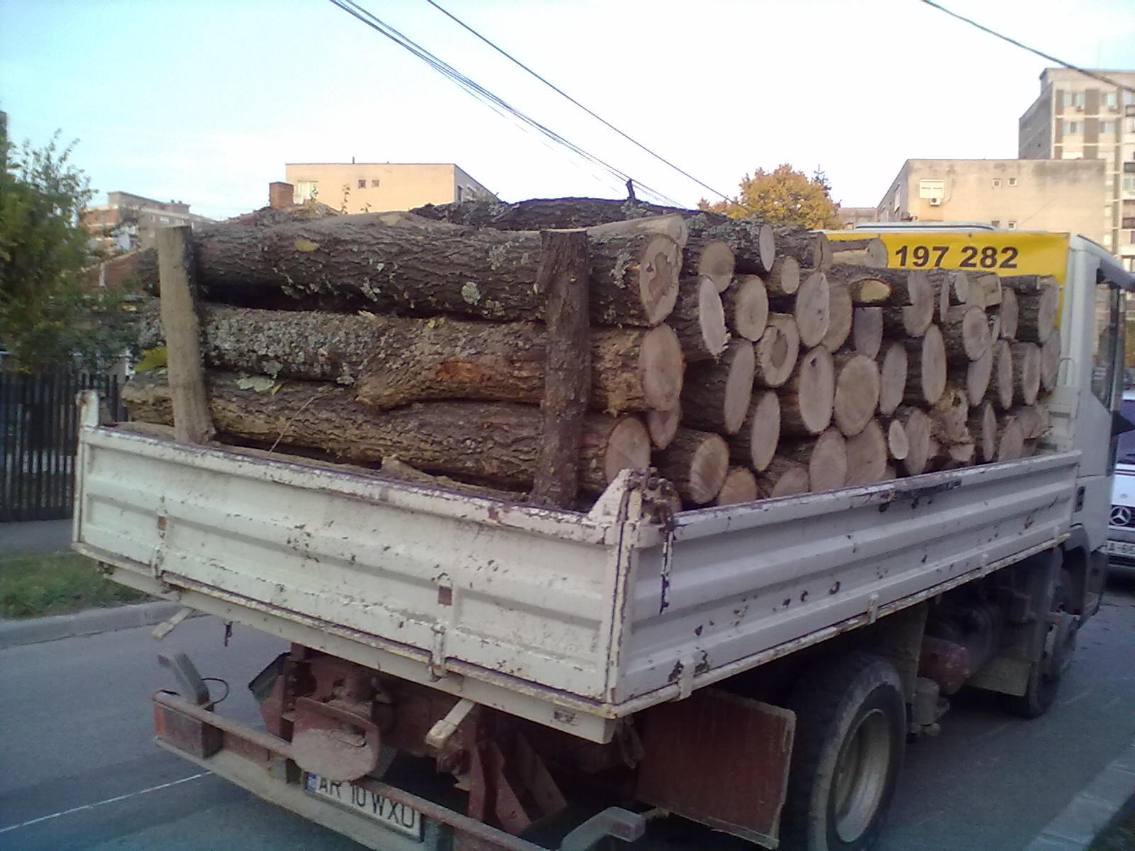 Un nou transport ilegale de lemne oprit de jandarmi, la Tășnad