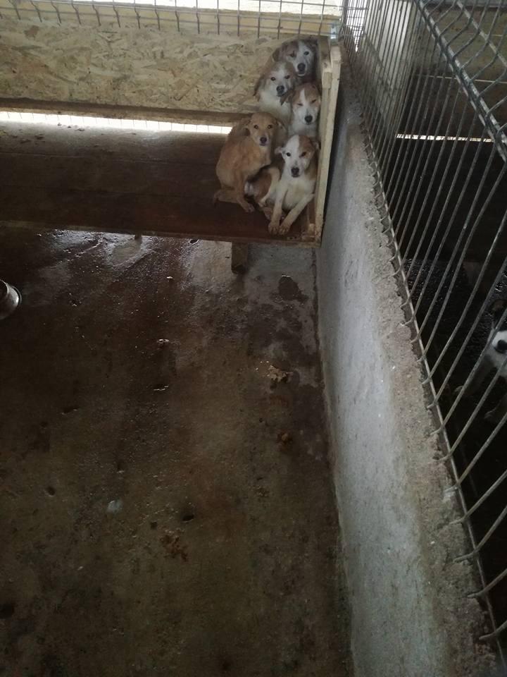 Zeci de necuvântătoare au fost omorâte, la adăpostul de câini de la Dara