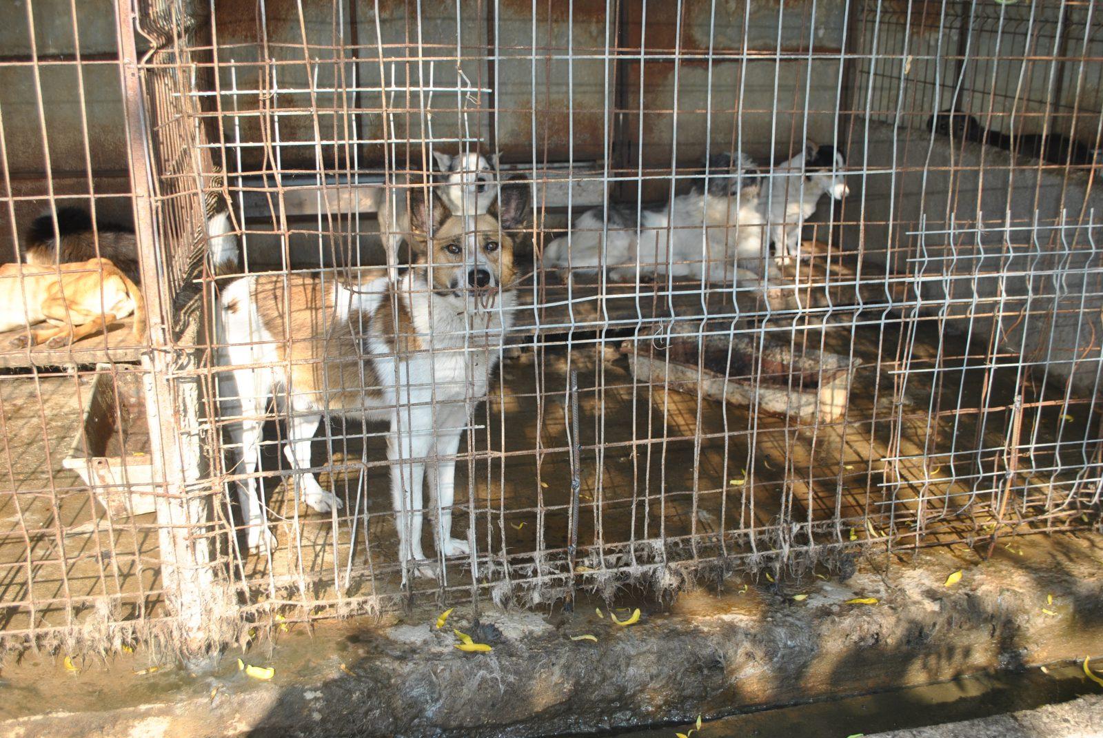 Peste 1200 de câini au fost uciși la adăpostul de la Dara. Bihorenii vor să facă revoluție