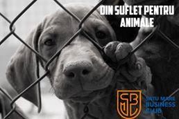 """Satu Mare Business Club lansează campania """"Din suflet pentru animale"""""""