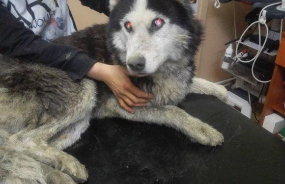 Câine de rasă, aruncat de stăpân în Someș, pentru că nu și-a permis investigații medicale pentru el