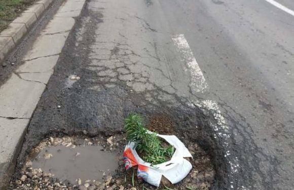 """Sătmărenii se revoltă! Cea mai periculoasă groapă din oraș, """"umpluta"""" cu o plantă"""