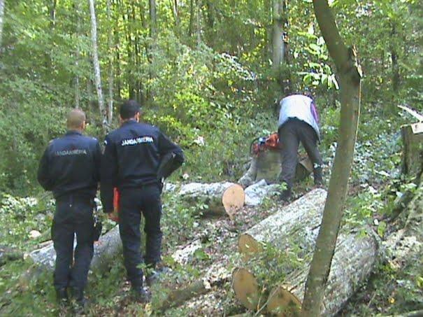 Un bărbat a fost prins la Homorod în timp ce tăia ilegal lemne din pădure