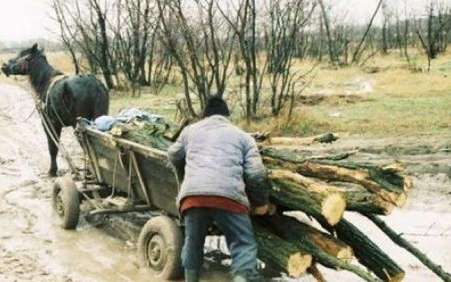 Două căruțe pline cu lemne, confiscate de către jandarmi. Nici unul din proprietari nu avea acte pe lemnele aduse din pădure