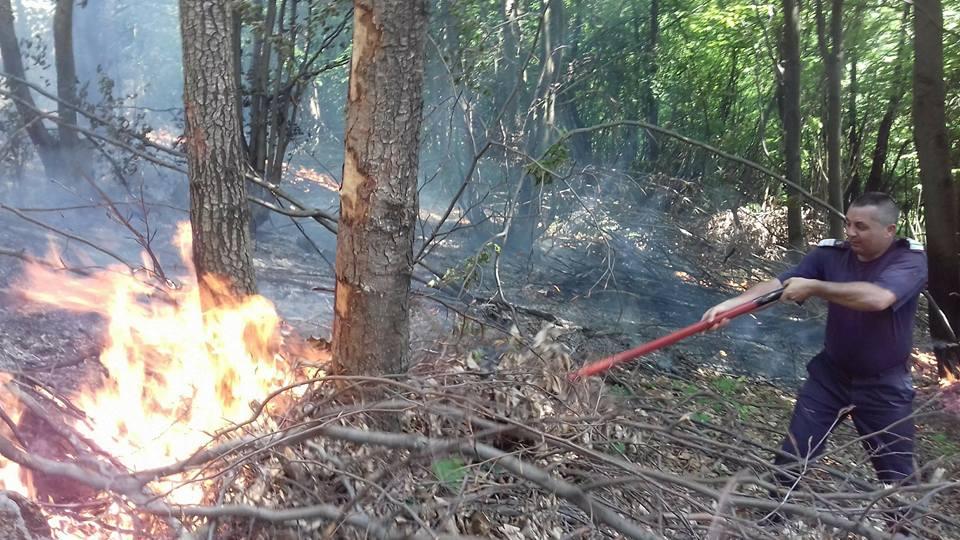 Incendiu de vegetație în Oaș. Pompierii au luptat contra focului cu lopeți, timp de mai bine de o oră