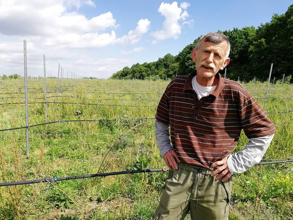 """Videoreportaj – Povestea celei mai mari culturi de GOJI din Europa, de la Ciuperceni :""""Când au venit cei de la centru de cercetare au zis că mai bine mă fac frizer"""""""