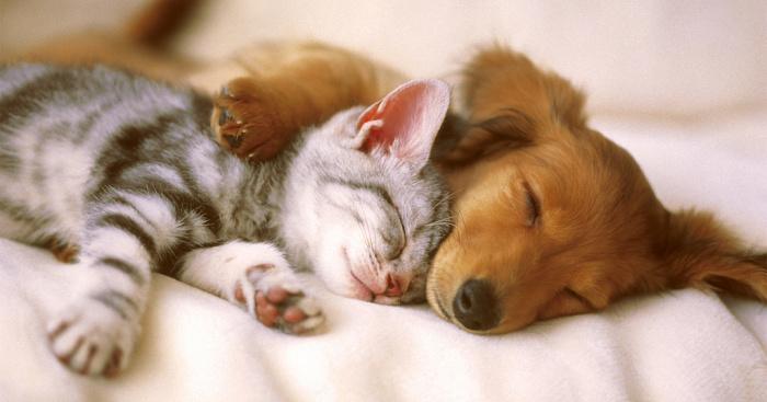 Câini și pisici la bloc, doar cu acordul vecinilor. Ce părere aveți?